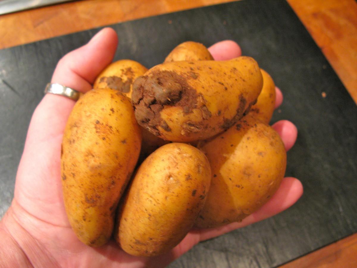 Kartoffel-Lauchsuppe mit Perlzwiebeln undKabeljau