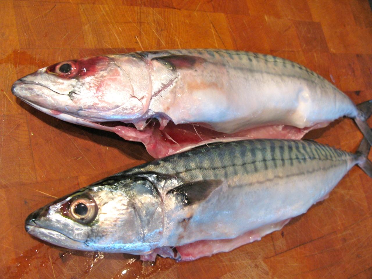 Die Makrele